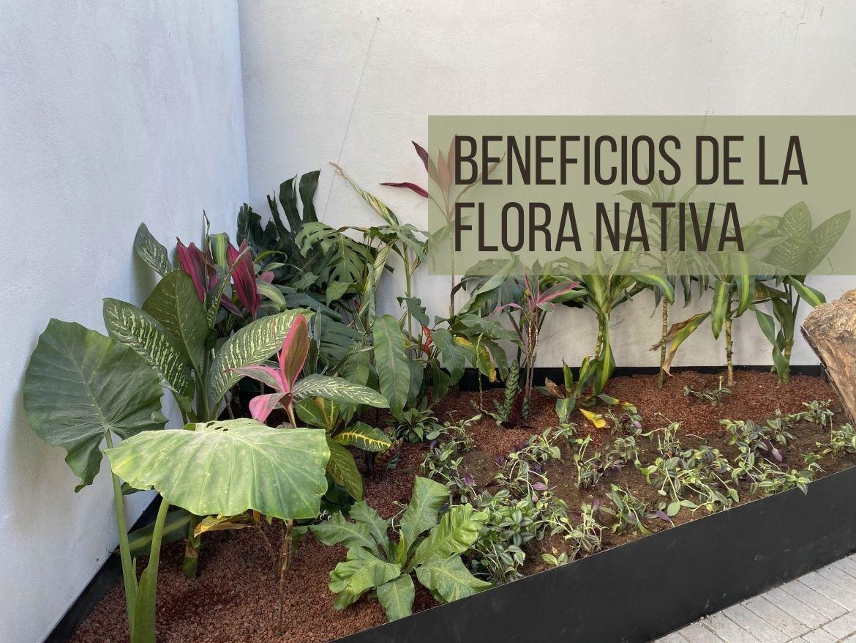 beneficios de la flora nativa en proyectos de paisajismo